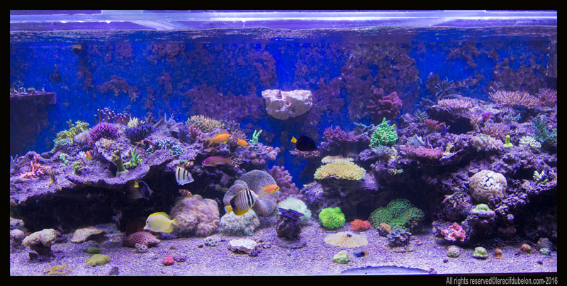 TUNZE Coral Rack long